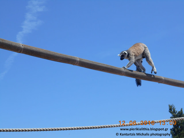 """Η """"ΑΛΗΘΕΙΑ"""" στο Αττικό Ζωολογικό Πάρκο. (Φωτογραφίες)"""