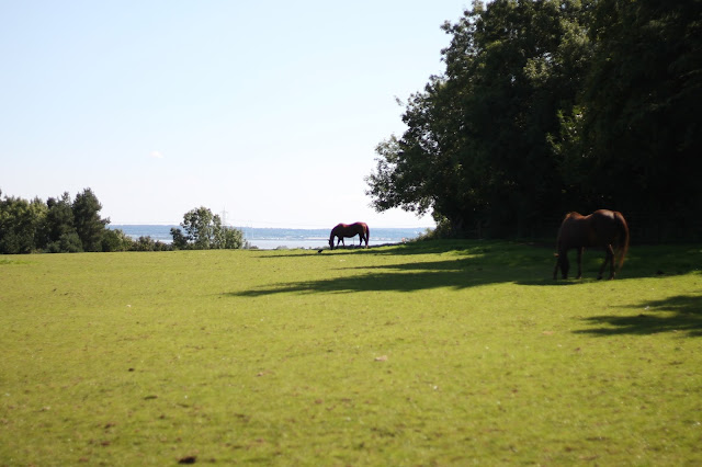scenic photo horses graving in field overlooking river on sunny day