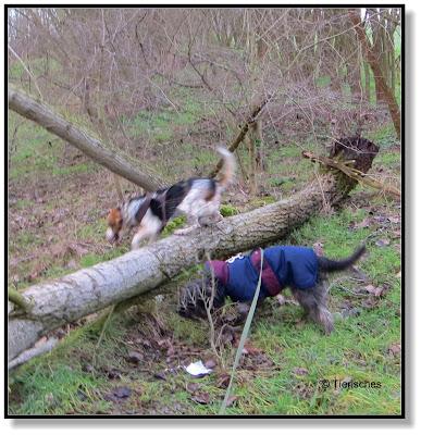 umgestüzte Bäume im Wald