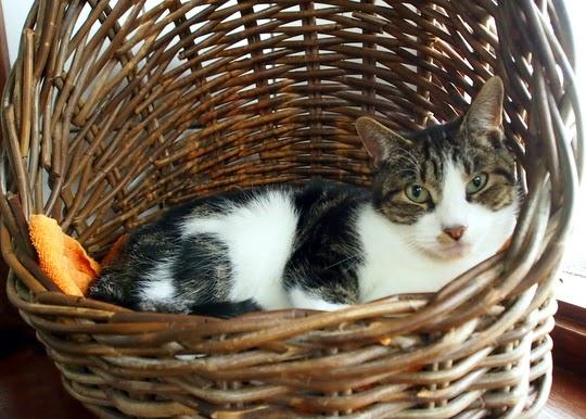 floating cat shelter Amsterdam
