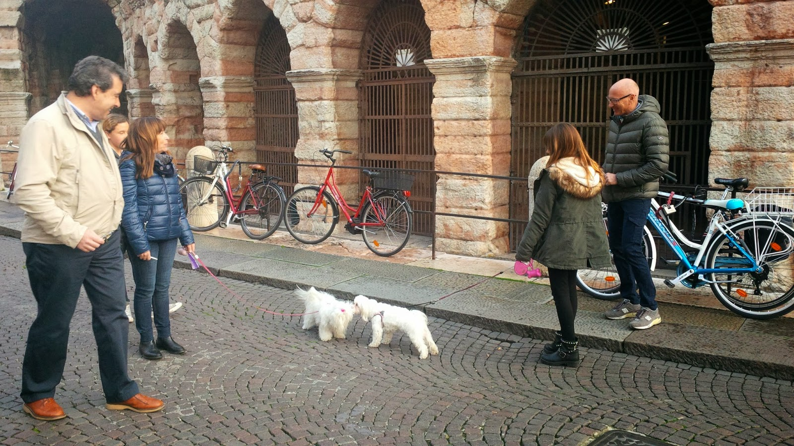 Two dogs meet in front of Arena di Verona