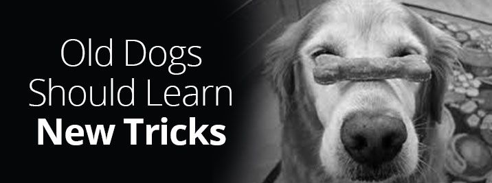 teaching an old dog new tricks We offer lean bbs & safety strategy consulting, keynotes, leadership certification, & coaching teaching old dogs new tricks from proact safety.