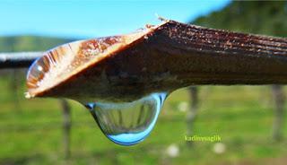 Asma Suyunun Faydaları