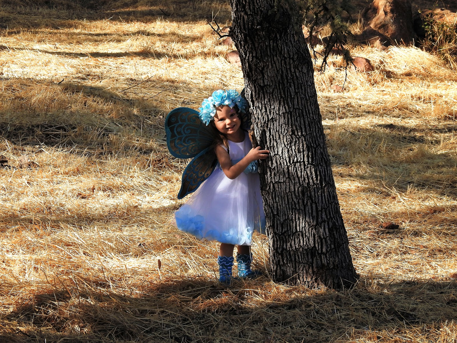 fairy buterfly photograpy