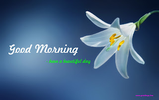 Beautiful flower morning wishes image free download