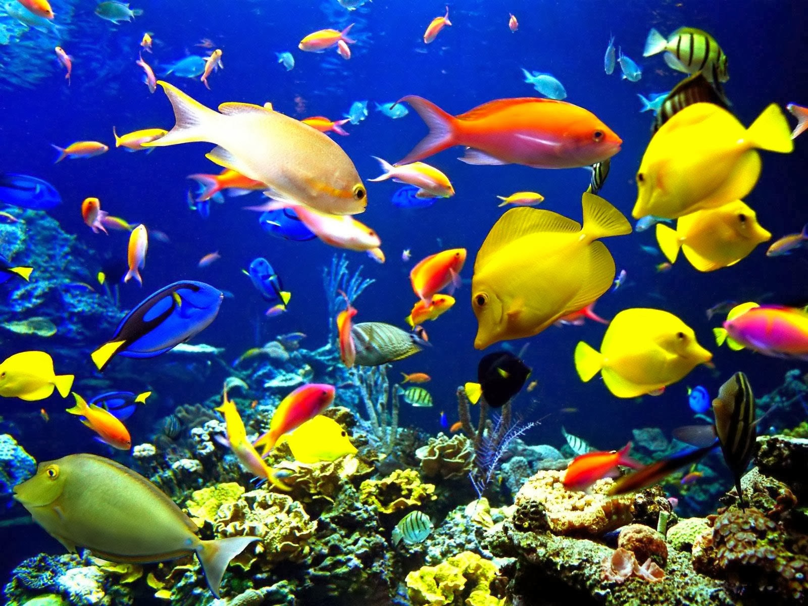 Kumpulan Gambar Wallpaper Ikan Bergerak