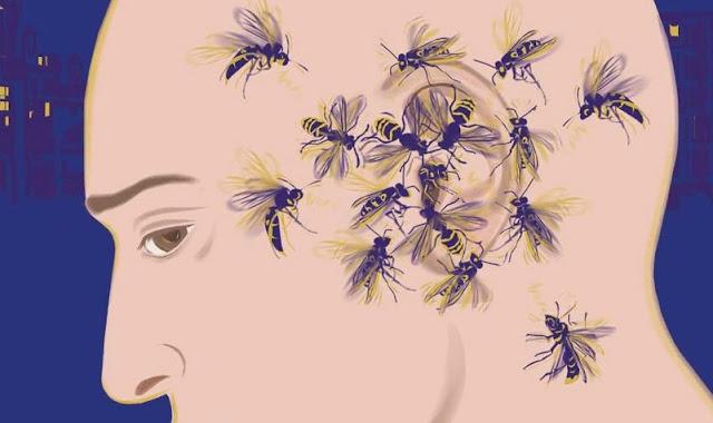 Nyamuk Suka Terbang Di Area Telinga Ini Alasannya