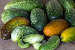Kandungan nutrisi dan manfaat mentimun untuk kesehatan