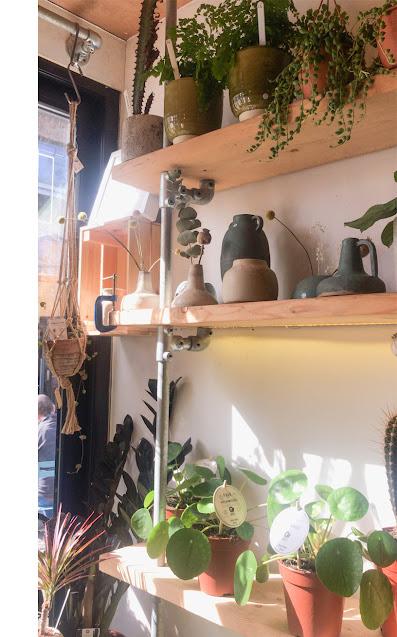 Indoor plants at plant shop