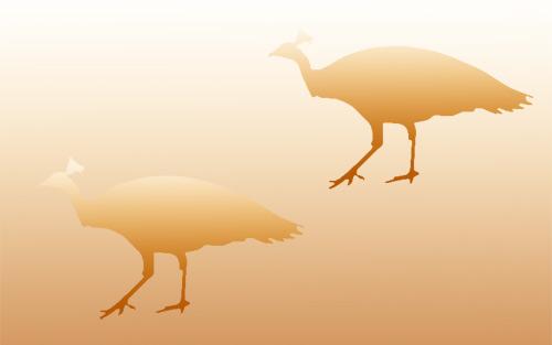 Aynı renkte olmasına rağmen farklı renklerde görünen kuşlar