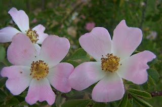 اجمل صور زهور