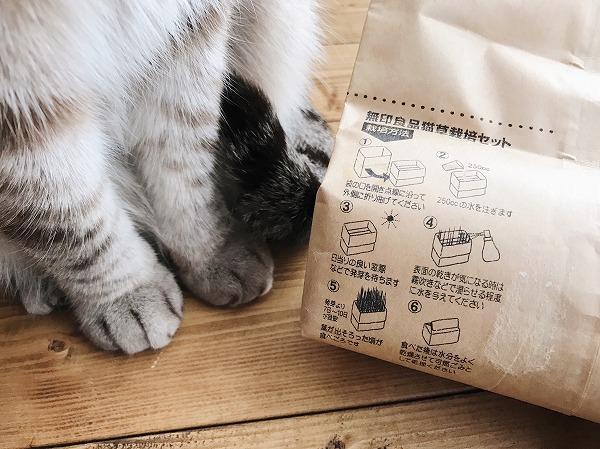 栽培セットの紙袋とシャムトラ猫の揃えた可愛い前脚