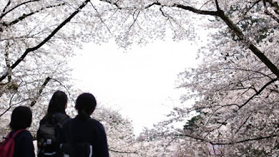 Festival de Sakura de Hirosaki