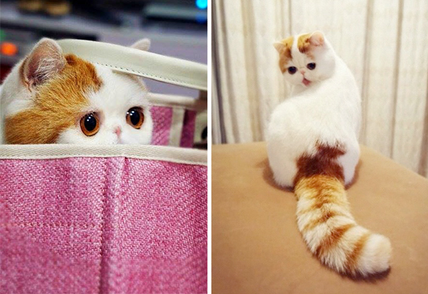 Snoopy, The Cutest Cat Ever-1