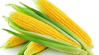 peluang-usaha-pengolahan-jagung