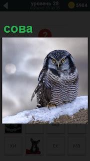 В зимнее время сидит сова на толстой ветке дерева с огромными глазами и смотрит вперед