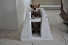 megaesofago cães pequenos