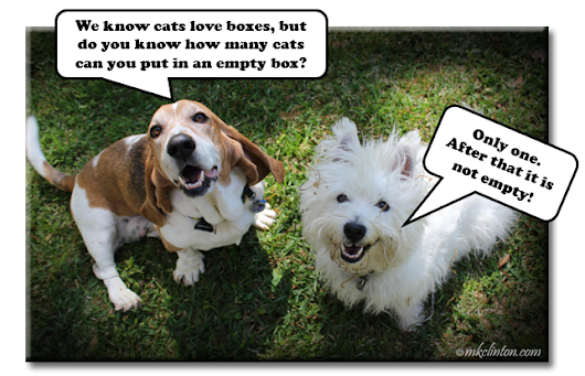 Doggone Silly Jokes & Riddles