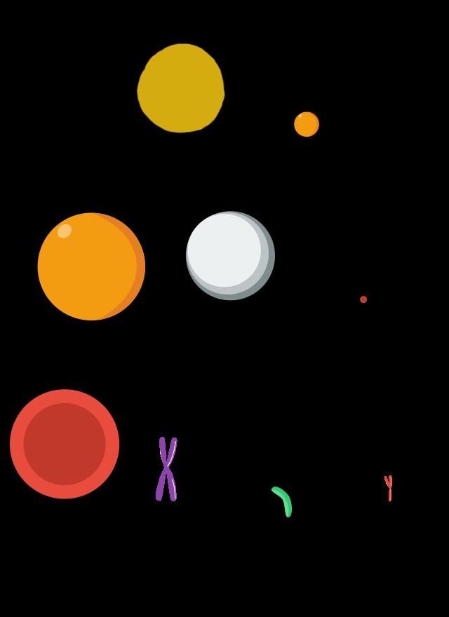 Σύγκριση μεταξύ κόκκου άμμου-ωαρίου-λευκού και ερυθρού αιμοσφαιρίου-χρωμοσώματος-κολοβακτηρίδιου