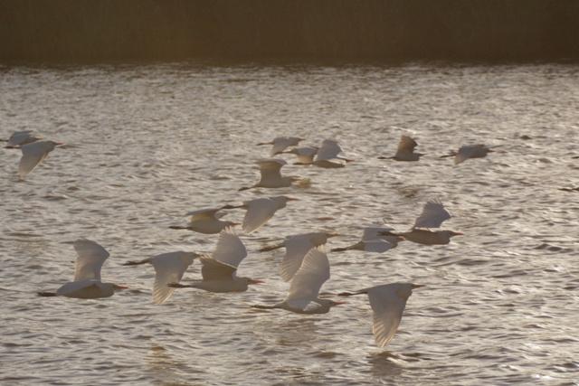 Escenas sacadas de película en el lago de Santa Lucia