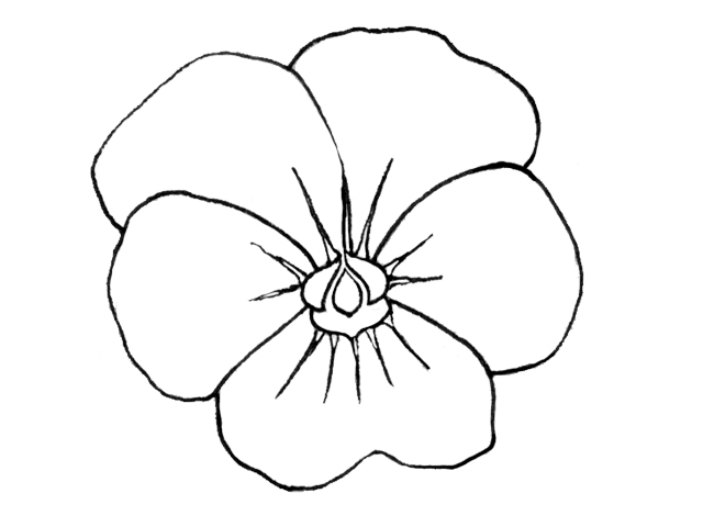 pansy flower drawing - photo #25