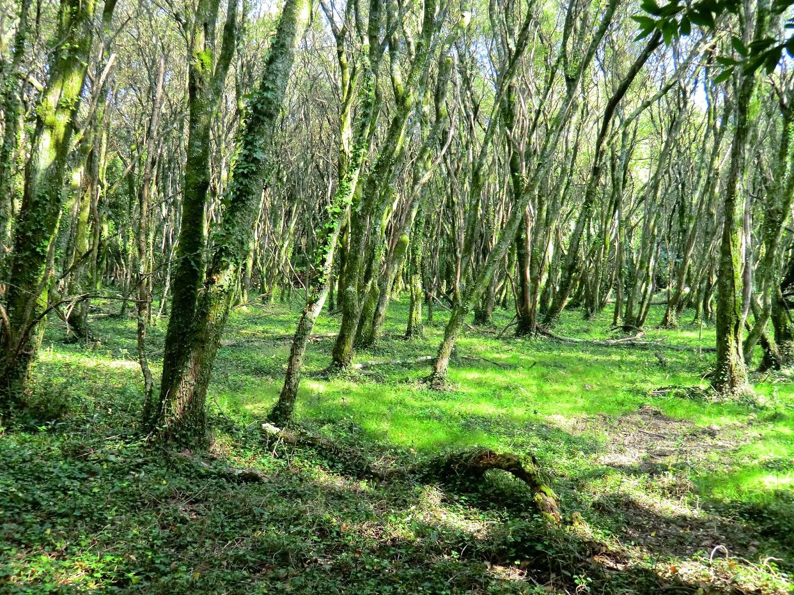 Pazo de la saleta la magia de los bosques visita dos for Carson bosque y jardin