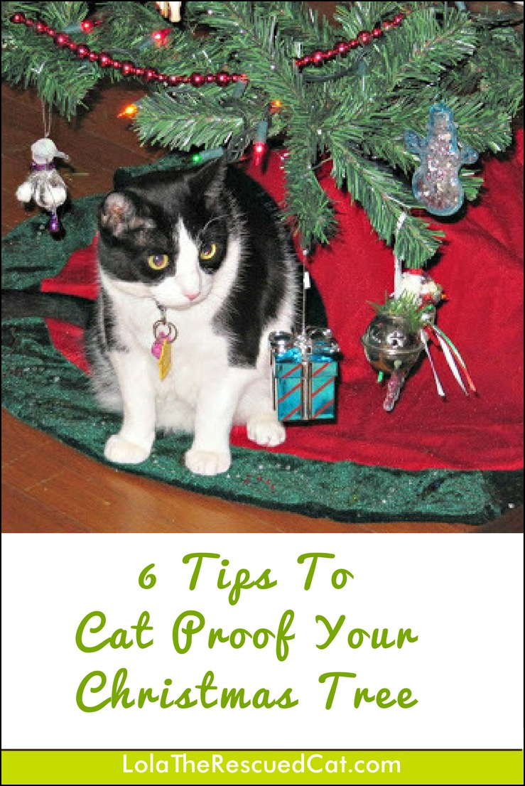 How To Cat Proof Your Christmas Tree.Lola The Rescued Cat Christmas Is Coming 6 Tips To Cat