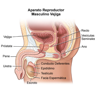 Male lower rectal pain anus