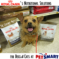 royal canin nutritional solutions