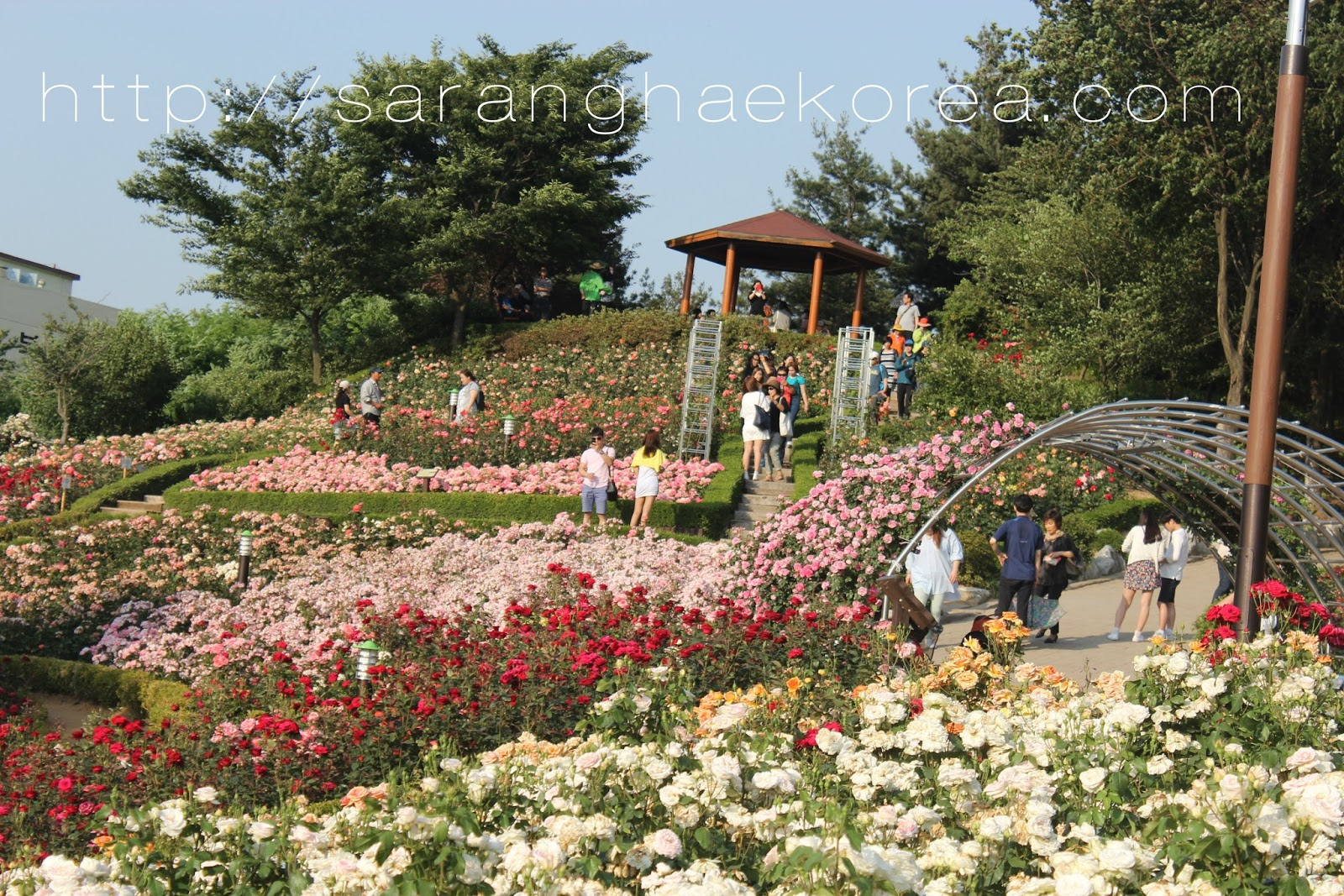 The Romantic Million-Rose Garden in Bucheon (백만송이장미원 ...