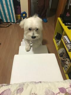 escadas para cães micro