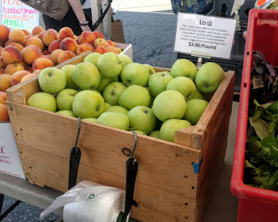Bin of green Lodi apples