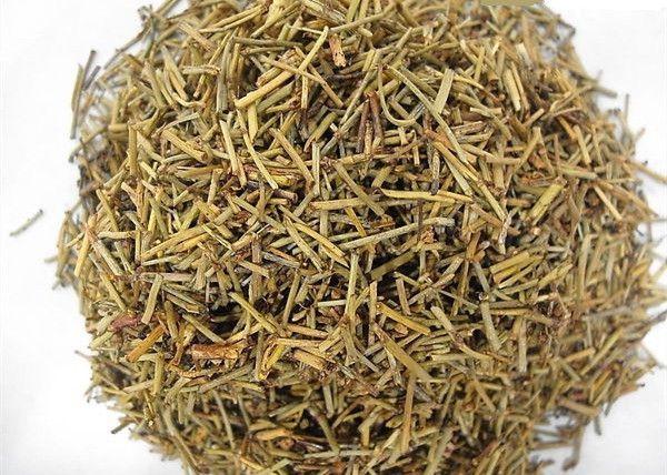 Ma Hoàng khô - Ephedra sinica; Ephedra equisetina; Ephedra intermedia - Nguyên liệu làm thuốc Chữa Cảm Sốt