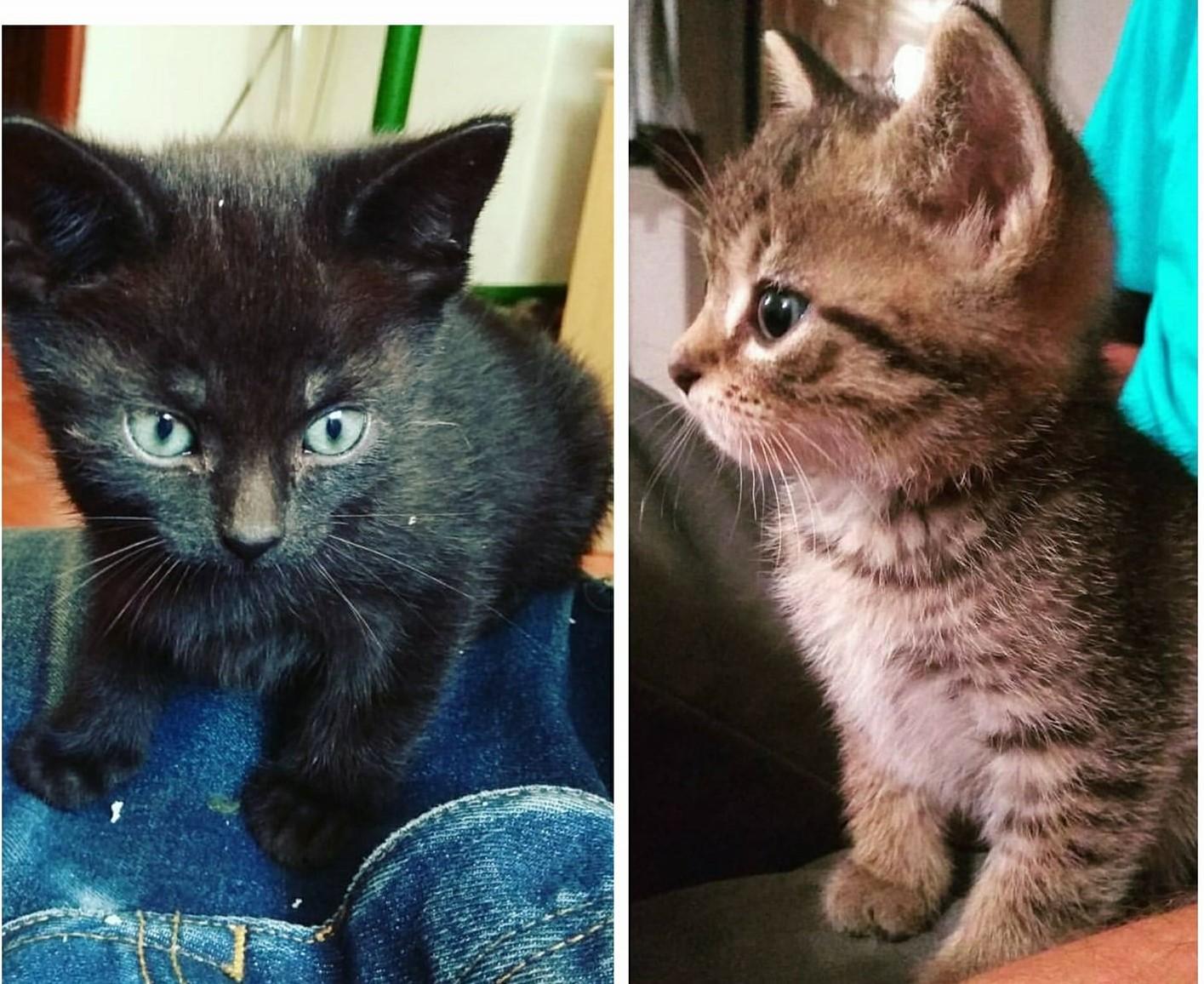 www čierna prdel mačička