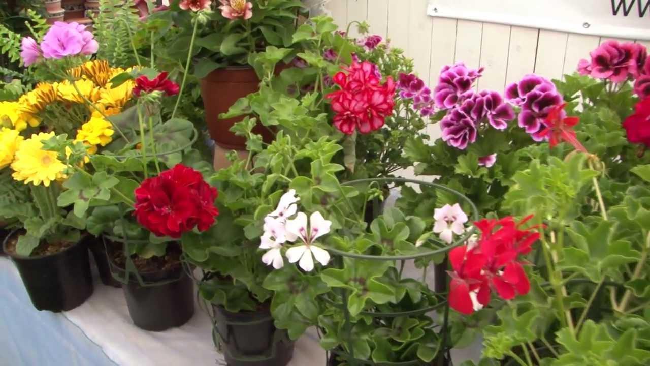 Implementacion de reas verdes plantas de sol y sombra - Plantas exterior mucho sol ...