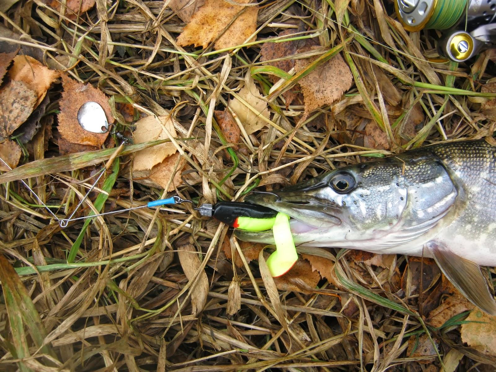 Особенности ноябрьской ловли щуки