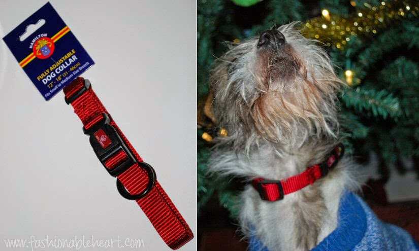 christmas spirit dogs festive collar fashion