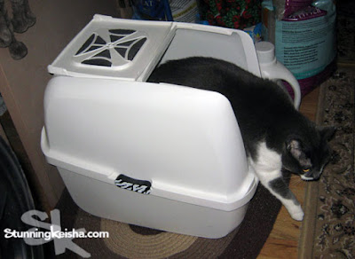Let's Talk Litter Boxes
