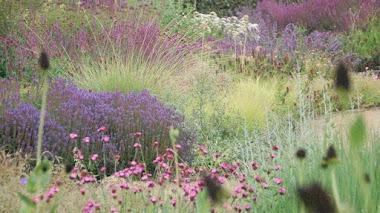 Millennium Garden <br /> El jardín de Piet Oudolf en Pensthorpe Natural Park