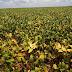 Safra baiana cresce e produção de grãos bate recorde em 2018.