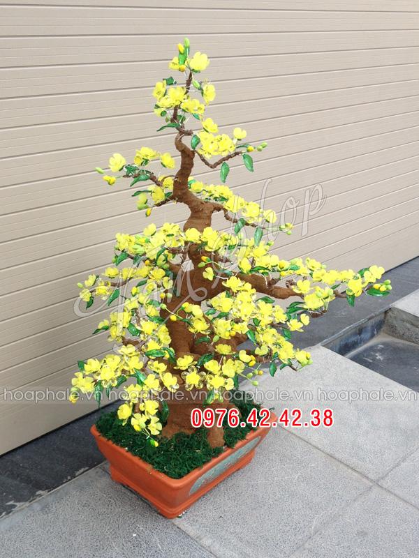 Goc bonsai mai dao tai Nguyen Quyen