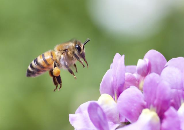 Bees Matter. Plant a Pollinator-Friendly Garden.
