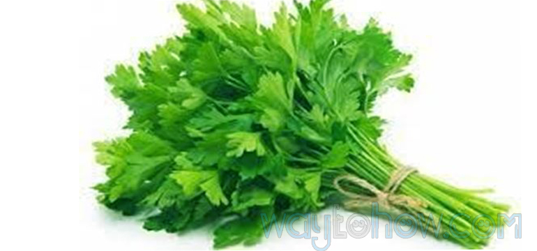 coriander leaves for hair loss home new home remedy for men & women