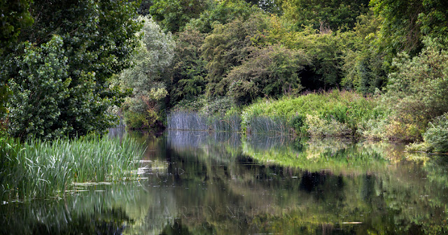 River Ouse mirrors the lush vegetation at Fen Drayton nature reserve
