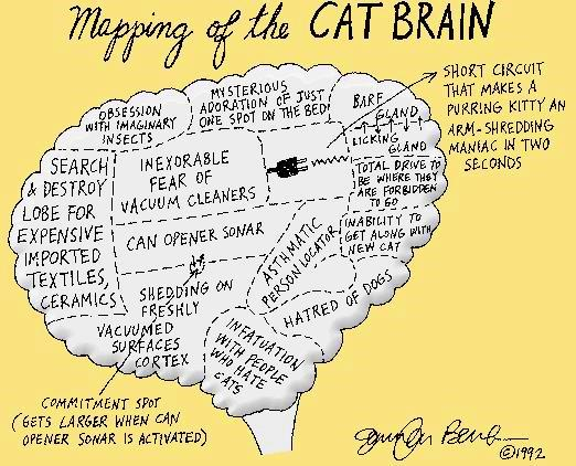 Funny Mapping of the Cat Kitty Feline