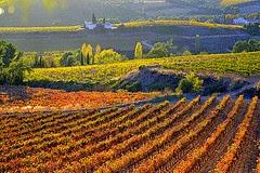 Vinyes de Santa Maria de Foix, el Penedès, Barcelona per Angela Llop a Flickr
