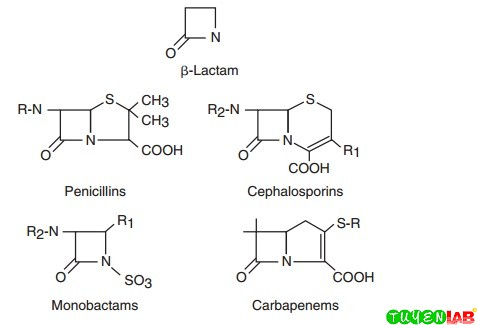 Chemical structures of major classes of β-lactam antibiotics.