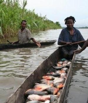 Cara Budidaya Ikan Bawal Di Kolam Terpal Untuk Pemula Agar Berhasil Pusat Ikan Koi