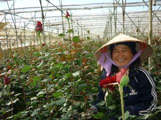 Người dân nơi đây đã biết áp dụng công nghệ hiện đại trong việc trồng và chăm sóc hoa