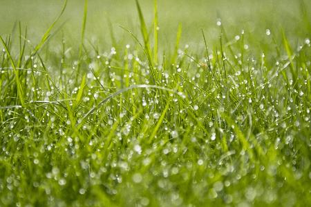 puisi nyanyian rumput untuk desember